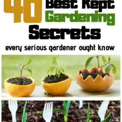 40 best kept gardening secrets every serious gardener ought to know